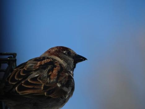 bird5